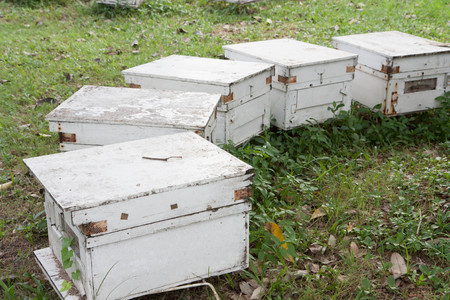 Beekeepers in row photo