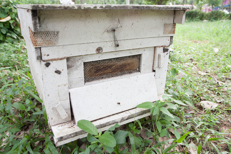 A bee box photo