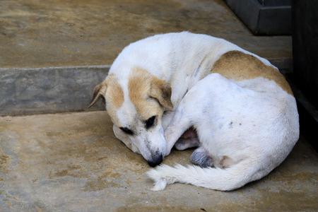 Abuse dog photo