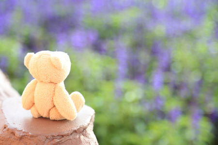Bear doll in blurred background Stock Photo
