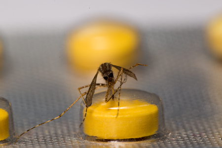 Mosquito and medicine photo