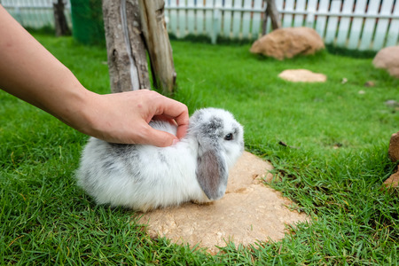 hand rubbing: hand is rubbing white rabbit