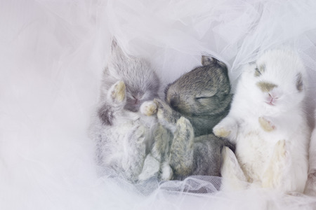 they: rabbit new born when they are baby
