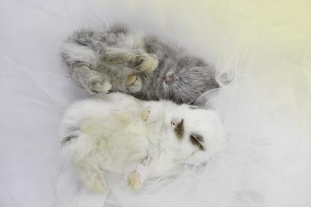 baby rabbit: baby rabbit