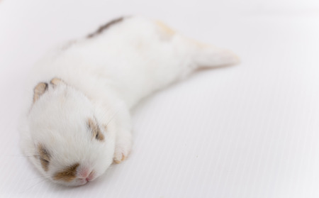 lays down: white baby rabbit lays down on white background Stock Photo