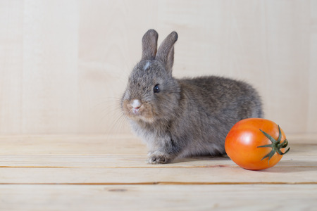 cony: young grey rabbit with red tomato
