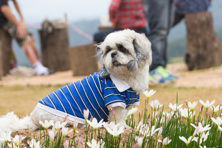 Old nice grooming dog on dogs blue shirt sit on log in nature