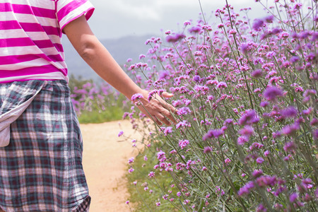 lavendin: Man touching purple flower field with right hand Stock Photo