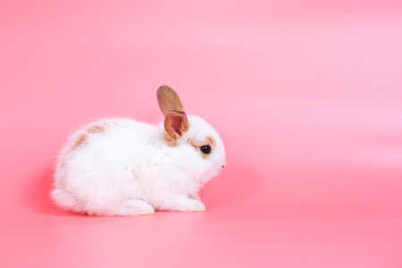 little adorable baby rabbit on pink background