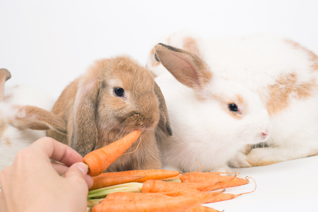 Young rabbit on white background, isolated
