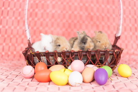 Yong small new born rabbit on pink background with colorful easter egg Stock Photo