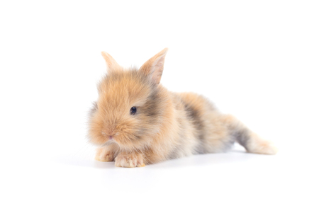 Baby rabbit 1 month old on white background