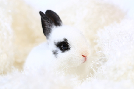 Adorable white and black small rabbit on white background