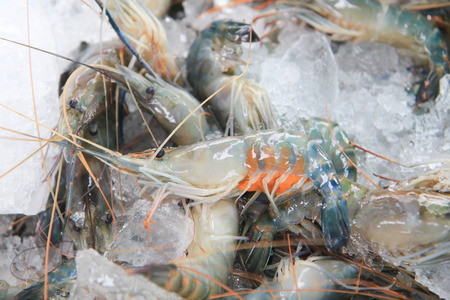 Fresh big shrimp or green prawn from sea on hand Stock Photo