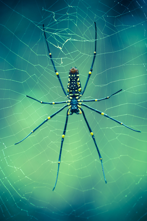 Giant Spider on web with bokeh as background. Creepy insect in forest Stock Photo