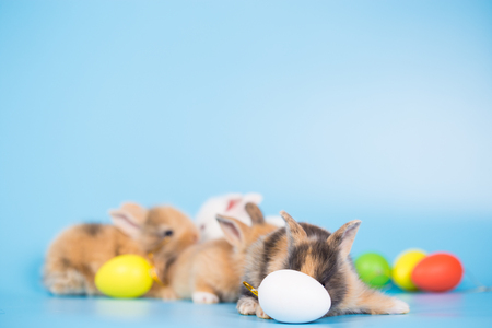 Yong small new born rabbit on blue background with colorful easter egg