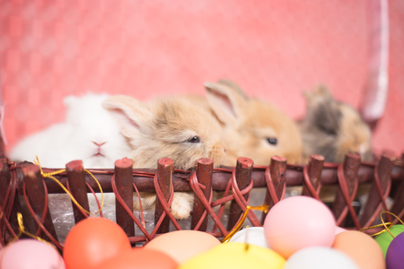 Yong small new born rabbit on pink background with colorful easter egg Фото со стока