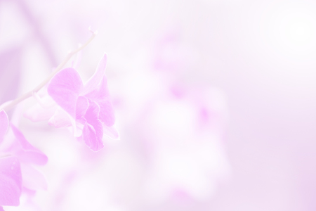 Blurred violet orchid bloom branch in soft light for card Фото со стока