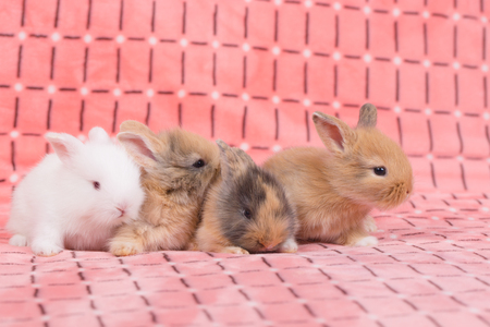 adorable young baby rabbit on pink cloth as background  - 3 weeks old little fluffy bunny Stock Photo