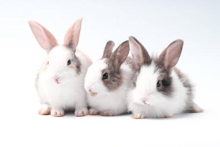 Stand de jeune lapin adorable sur fond blanc. Joli bébé lapin pour Pâques et la célébration du nouveau-né. 1 mois animal