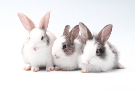 Young adorable bunny stand on white background. Cute baby rabbit for Easter and new born celebretion. 1 month pet