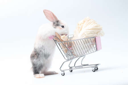 Young adorable bunny stand on white background. Cute baby rabbit for Easter and online shopping shop for pet and vegetable.