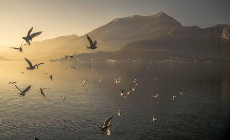 como: Gulls on Lake Como Stock Photo