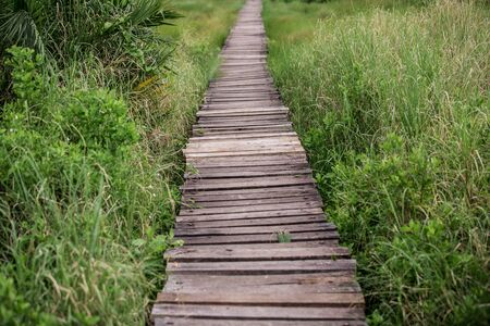 a path through lush tropical vegetation made of wooden planks