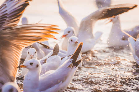 The Migratory Siberian Seagulls are playing on the Delhi Jamuna River