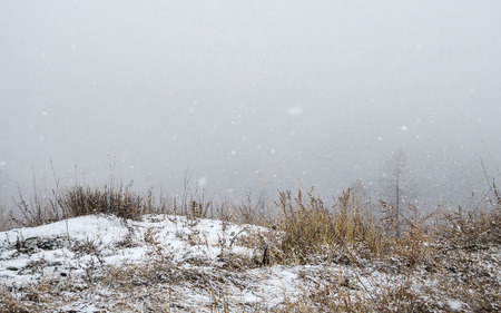 A dry grass in the snow and a grey mist on a background