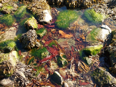 Rock Pool Seaweed Water Background