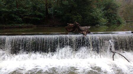 Vertedero con rama y árbol caído - Río Frome, Snuff Mills, Bristol, Reino Unido
