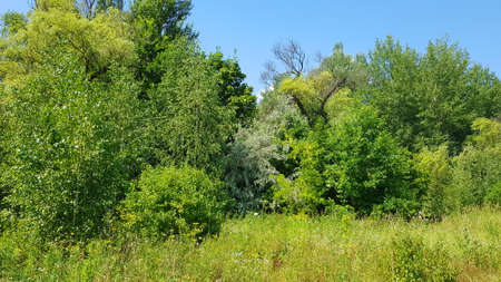 Green and yellowish trees in summer