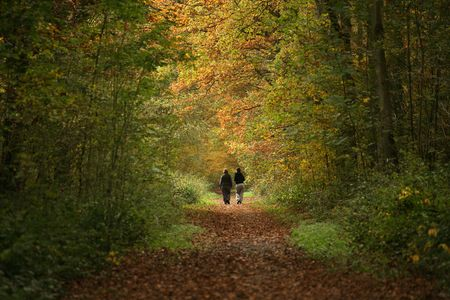 2 women walking along woodland path in Autumn Stock Photo - 2111501