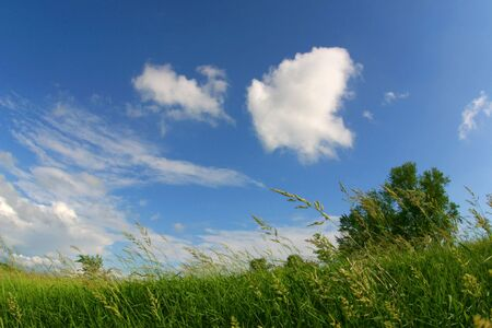 pleasing: green field and clouds on a windy day