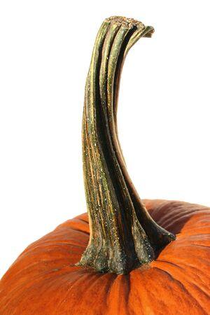 Pumpkin stem Stock fotó