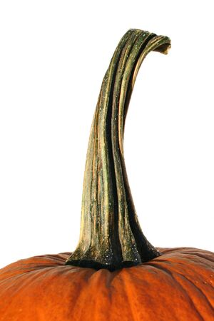 Closeup of pumpkin stem on  a white background Stock Photo - 2756383
