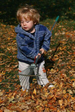 ethic: Preschool boy helping with yard work by raking the fallen leaves Stock Photo