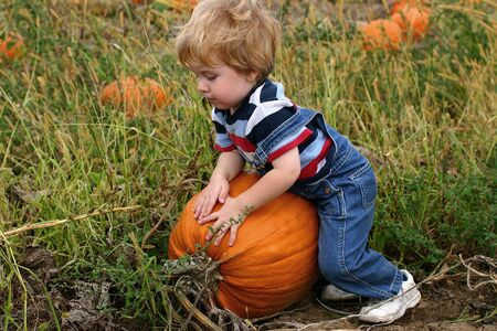 large pumpkin: Toddler boy picking a very large pumpkin