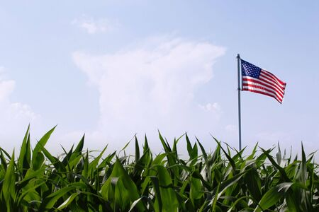 american midwest: an American flag flies over a field of corn  Stock Photo