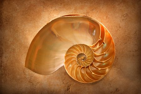 Chambered Nautilus on a marble slab glows with an inner light Stockfoto