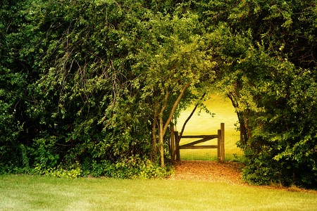 a gate leads to a secret garden that is surrounded by overgrow trees