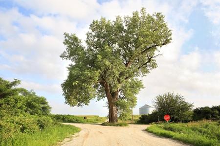De boom in het midden van de weg in het westen van Iowa