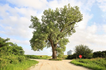 The tree in the middle of the road in  western Iowa Stock Photo