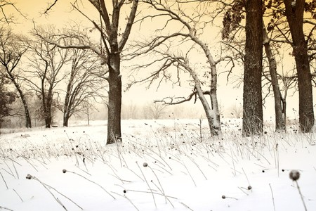 An earie winter scene with a golden glow