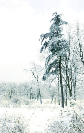 A winter scene with snow-covered trees