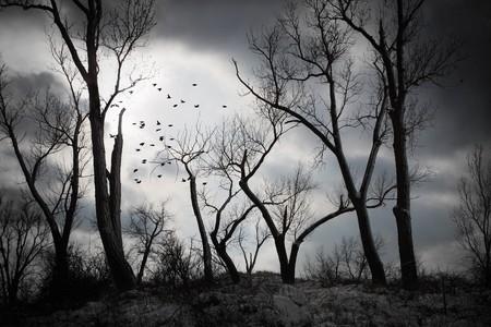 폭풍 구름 shilloueted 나무 거리에서 스톡 콘텐츠