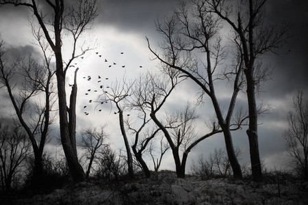 shilloueted trees with storm clouds in the distance Stock Photo