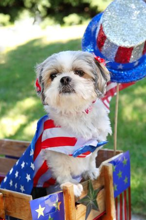 fourth of july: a dog in a wagon dressed up for the 4th of July