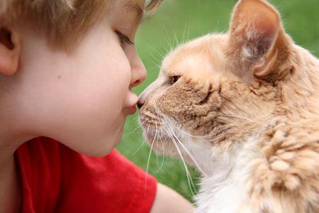 어린 소년이 키스하는 고양이 스톡 콘텐츠